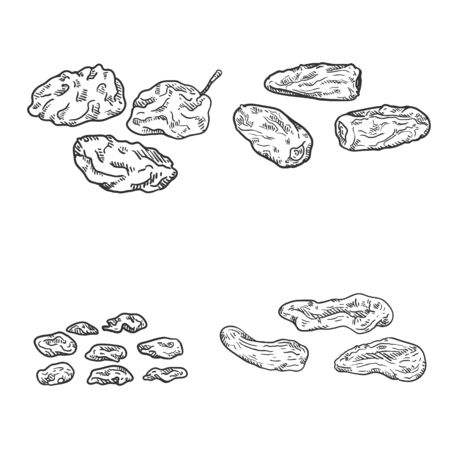 Vector Set of Sketch Dried Fruits. Prune, Date Fruit, Raisin and Dried Apricot. Ilustração