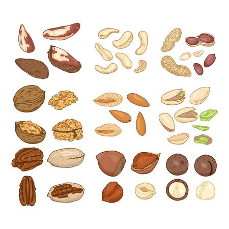 Cartoon Set of Nuts. All Types of Edible Nuts. Healthy snack. Organic Food