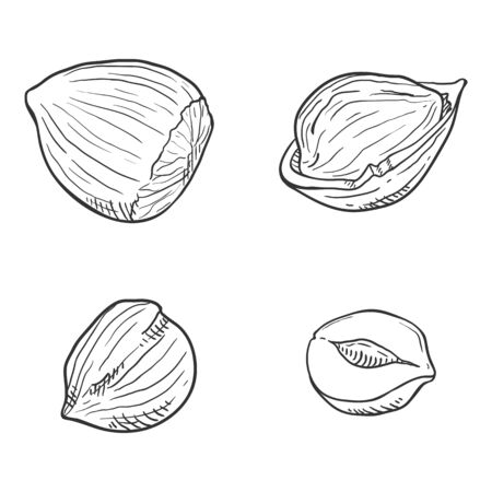 Set of Sketch Hazelnuts. Whole and Peeled Variations