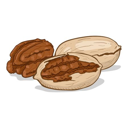 Cartoon Illustration - Pile of Pecan Nuts