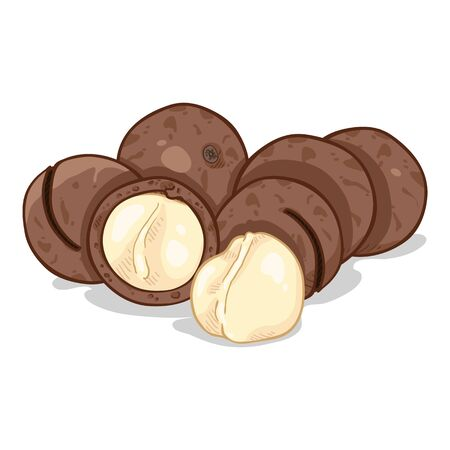 Cartoon Illustration - Pile of Macadamia Nuts