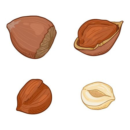 Set of Cartoon Hazelnuts. Whole and Peeled Variations
