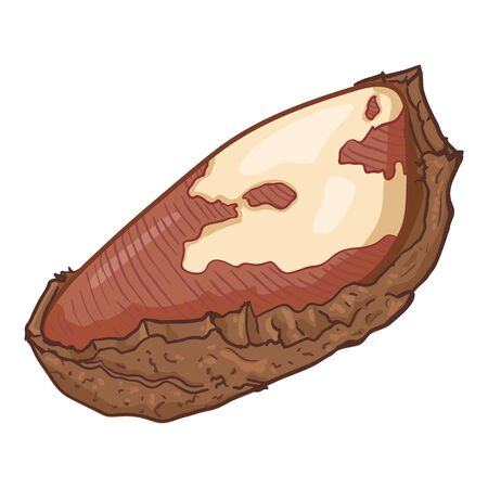 Cartoon Illustration - Single Brazilian Nut in the Shell