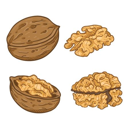 Set of Cartoon Walnuts. Whole and Peeled Variations.