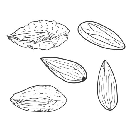 Set of Sketch Almond Nuts. In Shell and Peeled Variations Иллюстрация