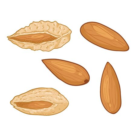 Set of Cartoon Almond Nuts. In Shell and Peeled Variations Ilustração