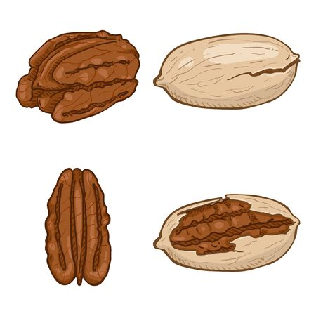 Set of Cartoon Pecan Nuts