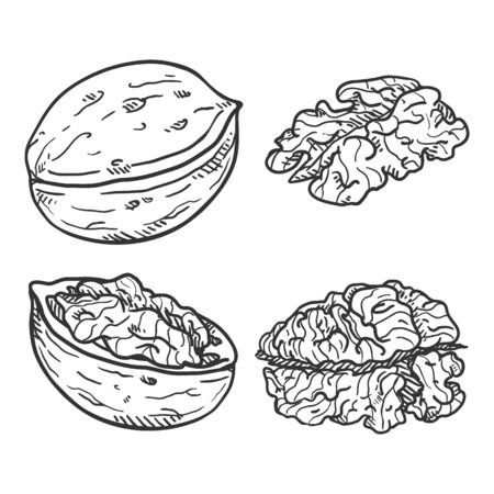 Set of Sketch Walnuts. Whole and Peeled Variations. Иллюстрация