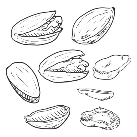 Set of Hand Drawn Sketch Pistachios