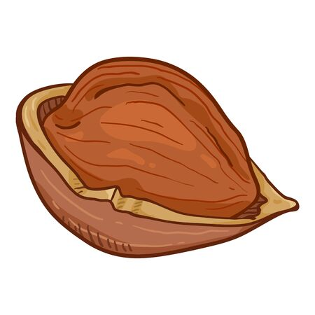 Single Cartoon Hazelnut Illustration Иллюстрация