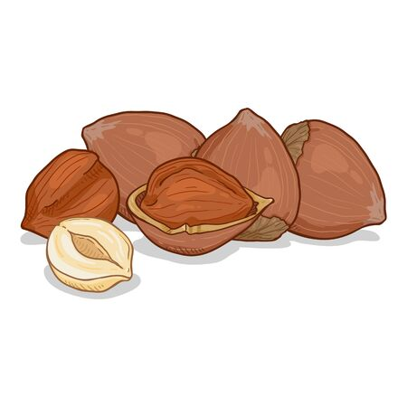 Cartoon Illustration - Pile of Hazelnuts