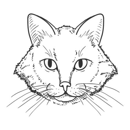 Vector Sketch Domestic Cats Portrait. Feline Face Illustration.