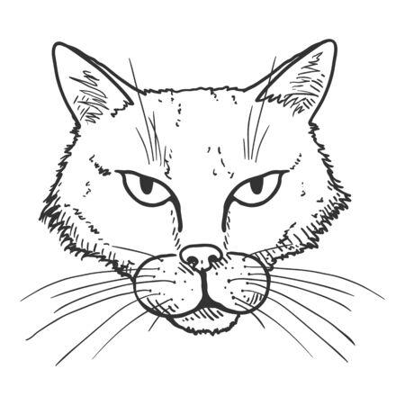 Vector Sketch Stray Cat Portrait. Feline Face Illustration. Illustration