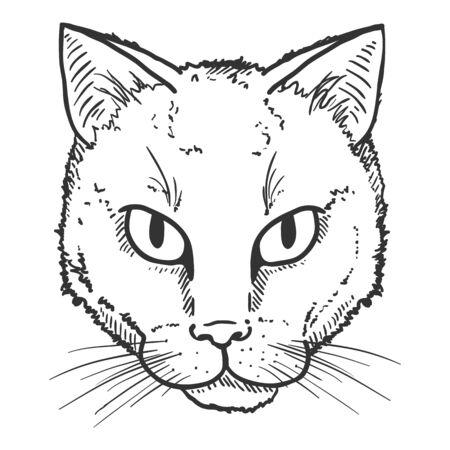 Vector Sketch Street Cat Portrait. Feline Face Illustration.