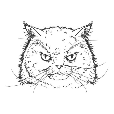 Vector Sketch Persian Cats Portrait. Feline Face Illustration. 向量圖像
