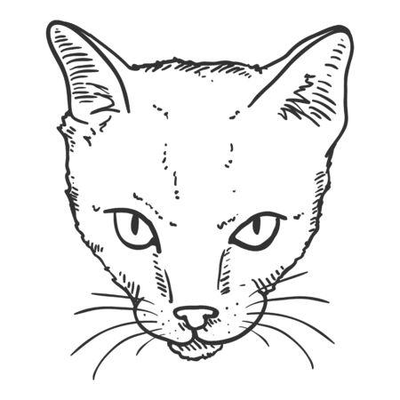 Vector Sketch Shorthair Cats Portrait. Feline Face Illustration.