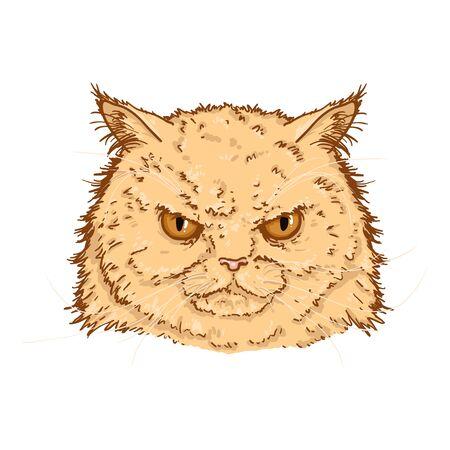 Vector de dibujos animados retrato de gatos persas enojados. Ilustración de cara felina.