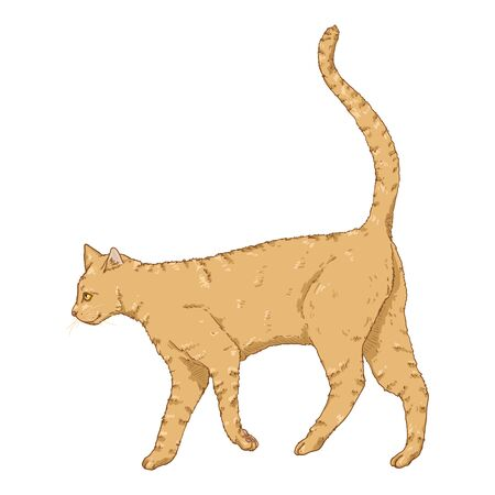 Walking Cat. Vector Single Cartoon Feline Illustration Ilustrace