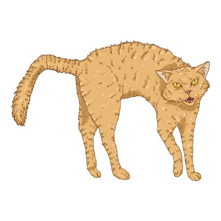 Bristling Cat. Vector Cartoon Furious Feline Illustration Illustration
