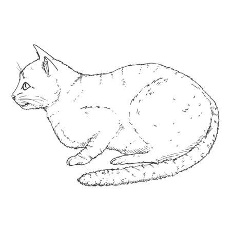 Calm Cat. Vector Black Hand Drawn Sketch Feline Illustration