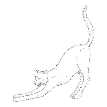 Stretching Cat. Vector Black Sketch Feline Illustration