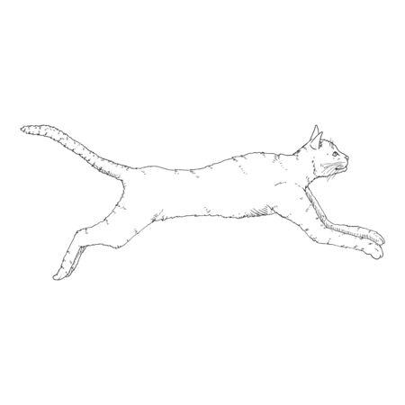 Running Cat. Vector Black Sketch Feline Illustration