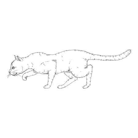 Sneaking Cat. Vector Black Sketch Feline Illustration