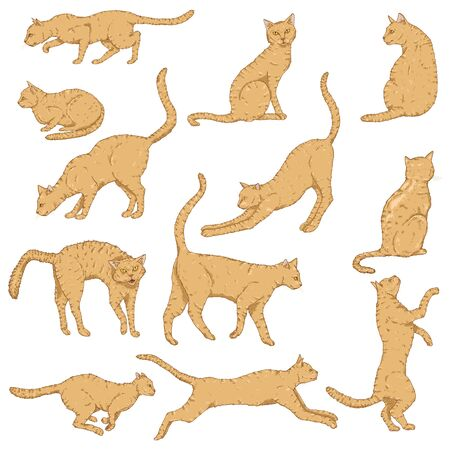 Vector Set of Cartoon Cats. Different Feline Poses and Variation.