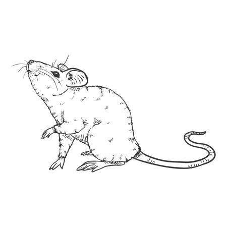 Vector Sketch Illustration - Curious Mouse Ilustração