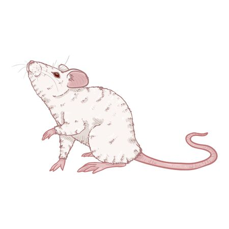 Vector Cartoon Illustration - Albino White Mouse