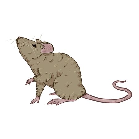 Vector Cartoon Illustration - Gray Mouse