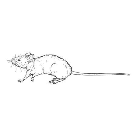 Vector Sketch Illustration - Walking Mouse Ilustração