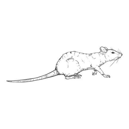 Vector Sketch Illustration - Walking Rat Ilustração
