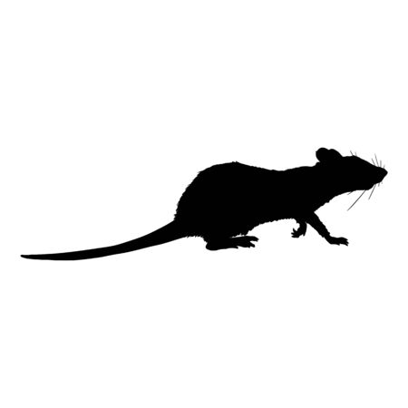 Vector Black Silhouette of Rat