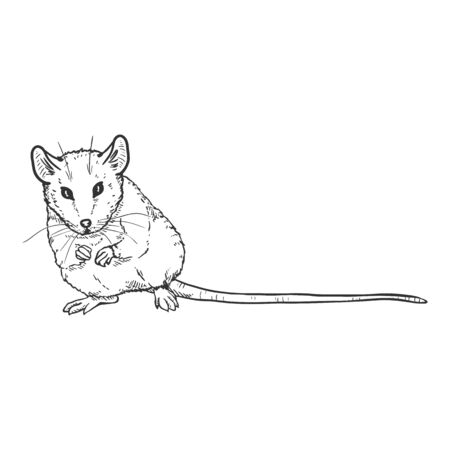 Vector Sketch Illustration - Sitting Mouse
