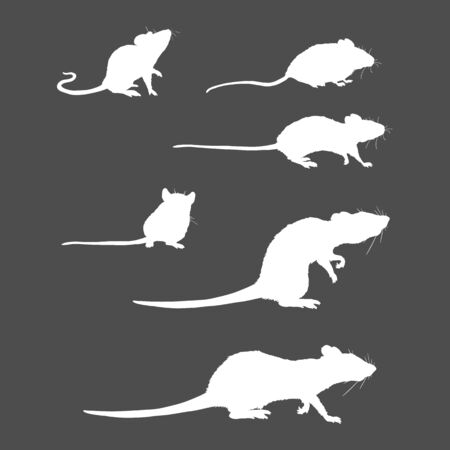 Vector Set of Rats and Mouses White Silhouettes on Black Background