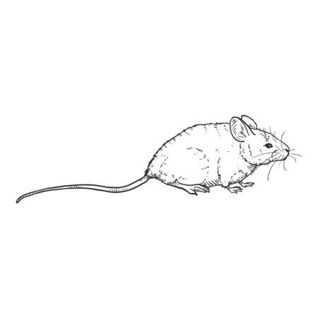 Vector Single Sketch Illustration - Mouse