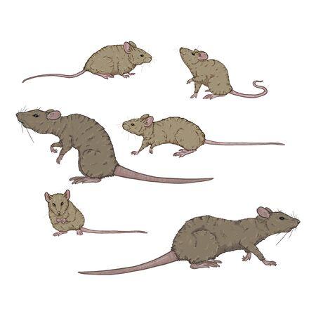 Ensemble vectoriel de rats et de souris gris de dessin animé. Illustrations de rongeurs