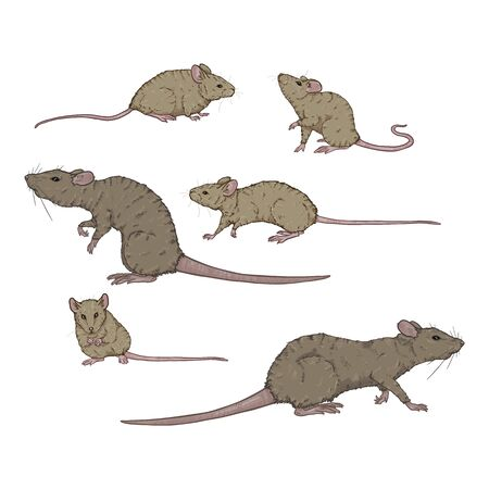 Vector Set of Cartoon Gray Rats and Mouses. Rodent Illustrations