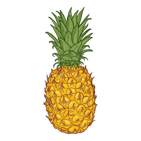 Vector Color Cartoon Whole Pineapple Vector Illustration