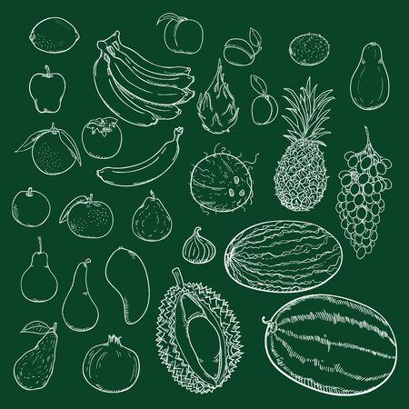 Vector Set of Chalk Sketch Fruits on Blackboard Background Иллюстрация