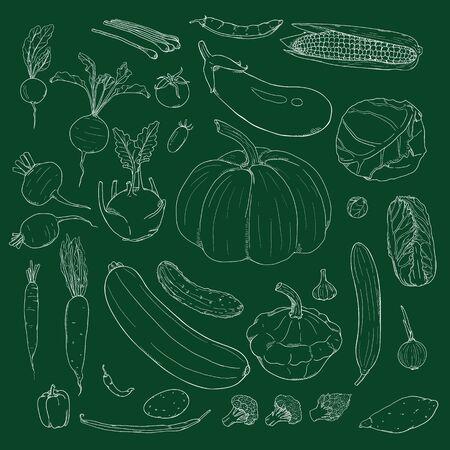 Vector Set of Hand Drawn Chalk Sketch Vegetables