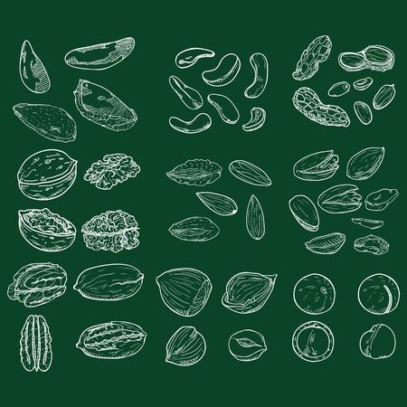 Vector Chalk Sketch Set of Nuts. All Types of Edible Nuts.