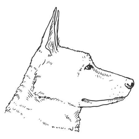 Sketch German Shepherd Dog Face Side View. Vector Illustration.