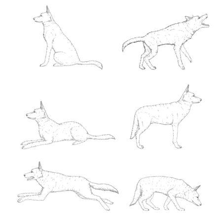 Vector Set of Sketch German Shepherd Dog Illustrations