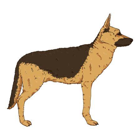 Vector Cartoon Standing German Shepherd Dog Illustration Illustration