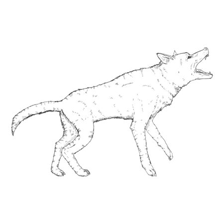 Vector Sketch Barking German Shepherd Dog Illustration Illusztráció