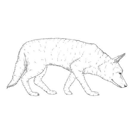 Vector Sketch Searching German Shepherd Dog Illustration Illustration