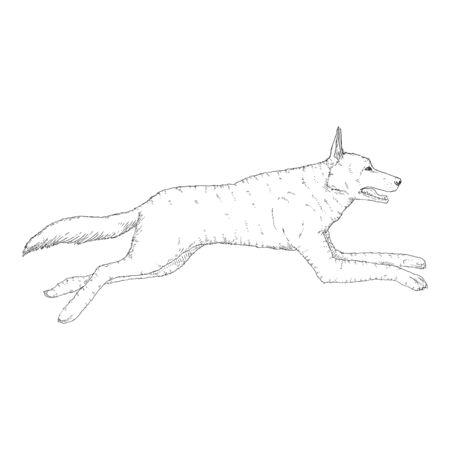 Vector Sketch Jumping German Shepherd Dog Illustration