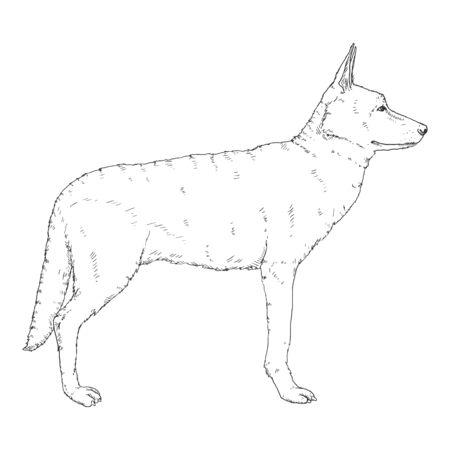 Vector Sketch Standing German Shepherd Dog Illustration